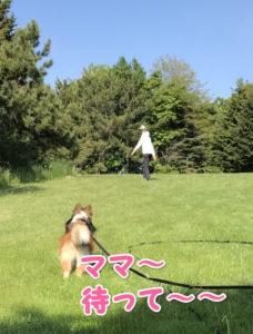 川下公園 犬散歩