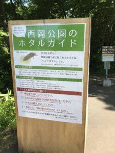 西岡公園 ホタル