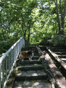 西岡公園 犬