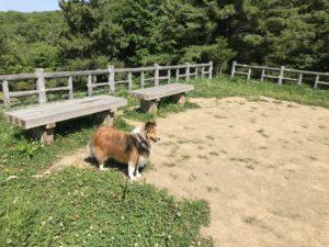 西岡公園 散歩