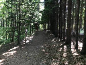 西岡公園 森