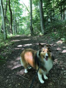 西岡公園 犬 散歩