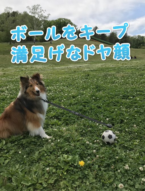 川下公園 犬