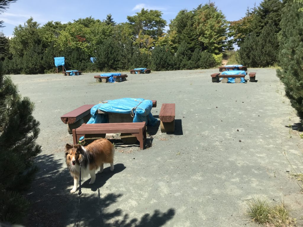 バーベキュー 公園 犬