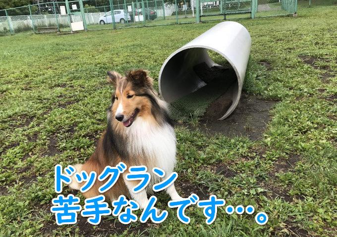 恵庭 ドッグラン