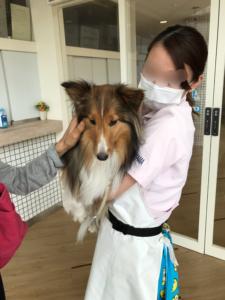 カットモデル 犬 札幌