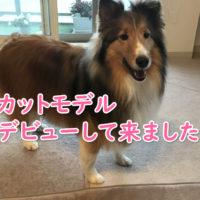 犬 カットモデル 札幌