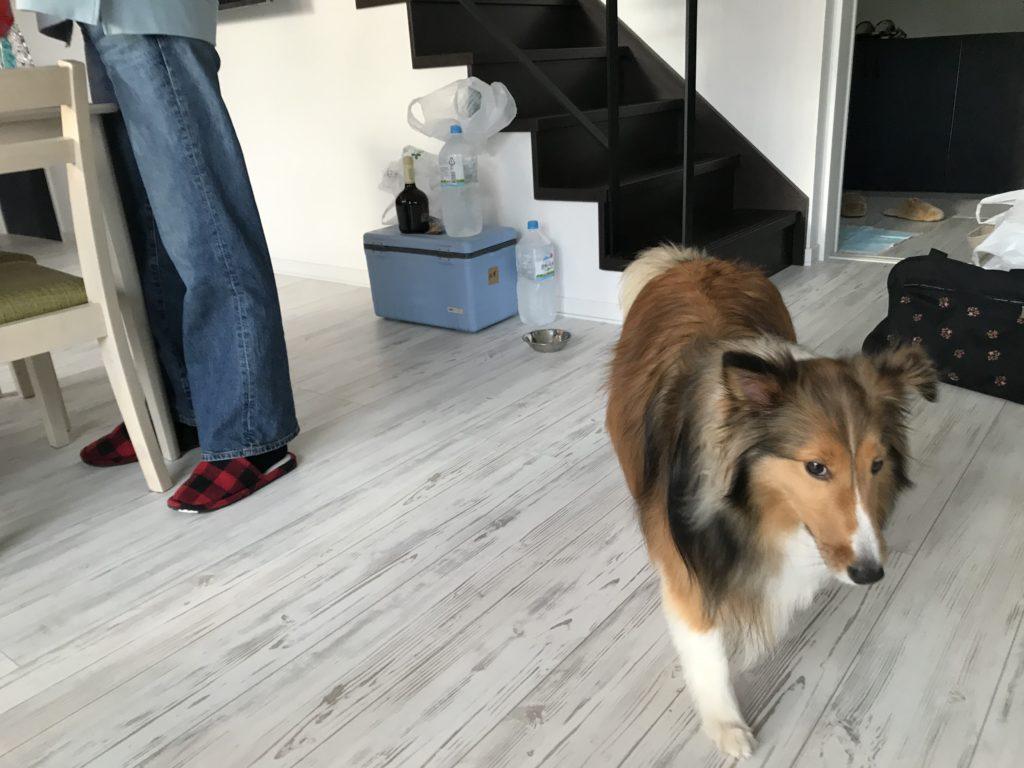 犬と泊まれる コテージ 北海道