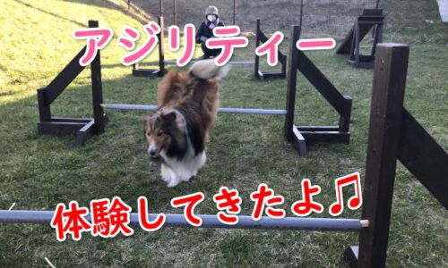 アジリティー ドッグラン 札幌