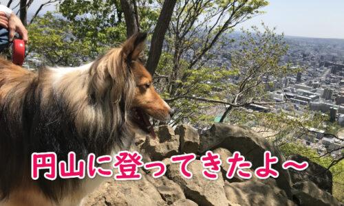 円山登山 ペット